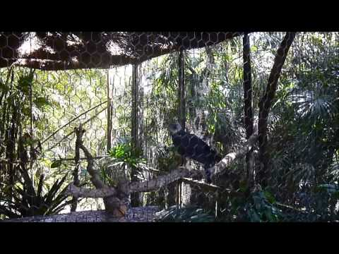 A Day in Belize (Zoo and City) 1-21/15