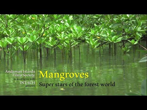 Mangroves - a documentary (trailer)