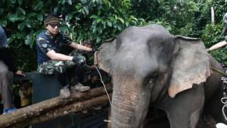 """ปฏิบัติการย้าย """"เจ้าแก้ว""""ช้างอินดี้กลับเขาตะกรุบ"""