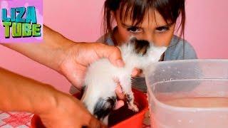 Купаем наших котят ✯ Карамелька, Кожик и Компот котята с помойки на прогулке