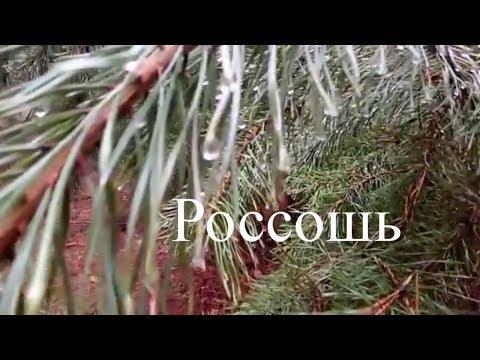 Россошь Воронежская область 1 января 2018 год  ЗИМНЯЯ СКАЗКА  Каялов бор  Россошь