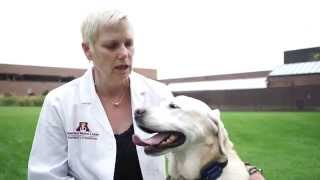 Healthy Pet Treats To Consider