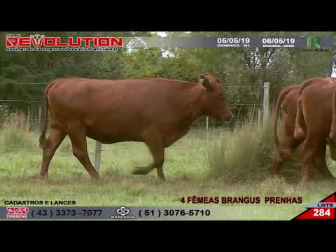 LOTE 284