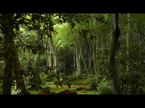 In Search Of Eden [Documentary]
