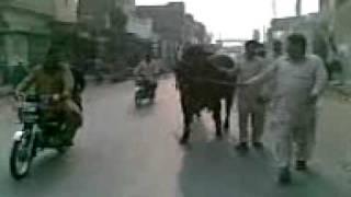 Rustam-E-Pakistan (Gulistan Marriege Club Multan Pakistan 1).3gp