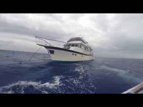 Coral Sea Spearfishing 2017