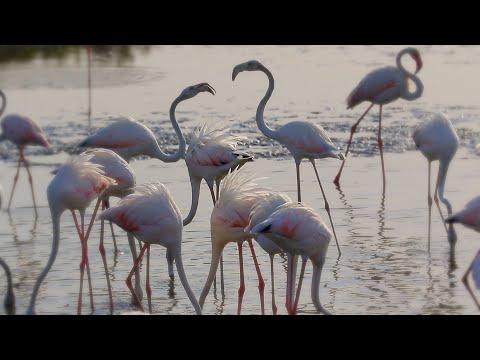 Flamingos @Ras Al Khor Wildlife Sanctuary Dubai