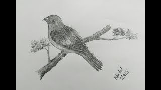 shading pencil easy bird birds drawings very learn
