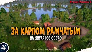 Рыбалка на Янтарном озере Карп Рамчатый Driler Русская Рыбалка 4