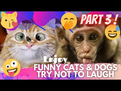 🤣 It's TIME for SUPER LAUGH! 🤣FUNNY CATS & DOGS🙀🐶BEST FUNNY MOMENTS PART 3 🤪 | TRY NOT TO LAUGH 🤭