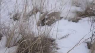 красивое видео природы алтая