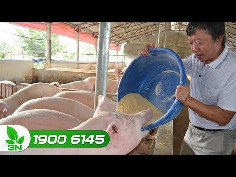 Đạt hiệu suất nuôi heo tối đa nhờ dinh dưỡng trọn vòng đời   VTC16