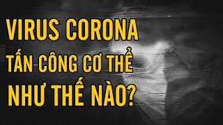 Virus corona tấn công cơ thể như thế nào?