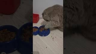 Моя кошка интеллегентный поросенок смешное видео с кошками