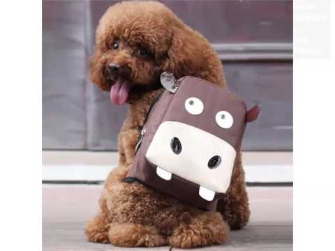 Dog Backpack Pictures And Ideas - Dog Products & Accessories - YouTube