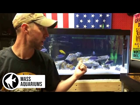 How to SET UP an AFRICAN CICHLID TANK. 4 EASY STEPS: Mbuna