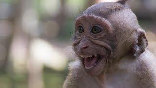 Awesome Wild Monkey