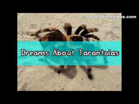 Spider Dream Meaning - Dream About Tarantulas