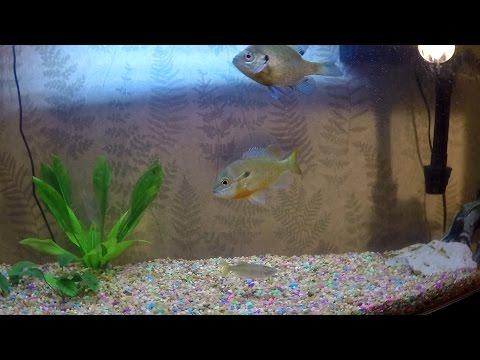 Feeding my Pet Fish & Tank Update (Philadelphia, PA)