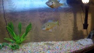 feeding my pet fish tank update philadelphia pa