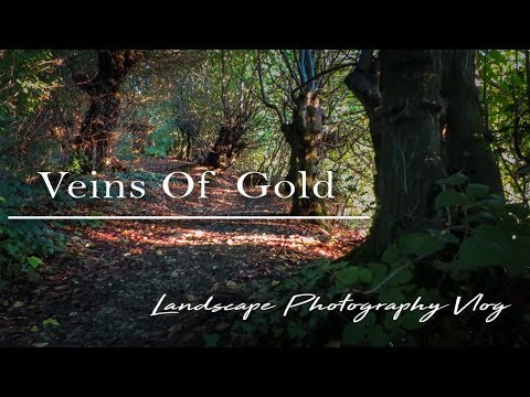 Veins Of Gold | Landscape Photography Vlog