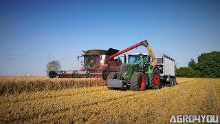 Małe Duże Żniwa 2017 w Świętokrzyskim Case Axial Flow 8240 Fendt Vario 936 716 Harvest