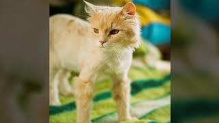 Котик Персик фото