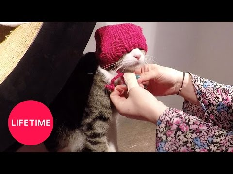 Pussy Hats at the Cat Café for International Women's Day | Lifetime from YouTube · Duration:  49 seconds