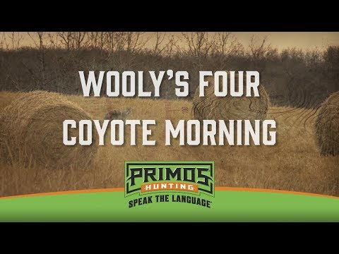 Wooly's 4 Coyote Morning