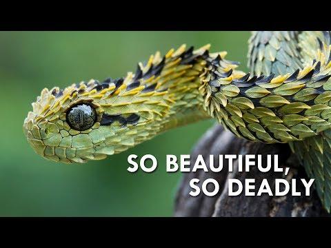 Vipers: Nature's Most Dangerous Noodles