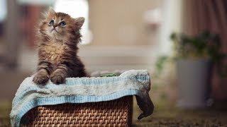 ♥Cute is Not Enough - Cute Dogs and Cats Compilation 2018 [HD]♥ #17   So Cute Animals