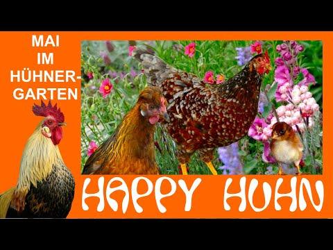 Happy Huhn Folge 84: Der Hühngarten im Mai mit Traudis Küken und Hühnerflüsterin Angelika