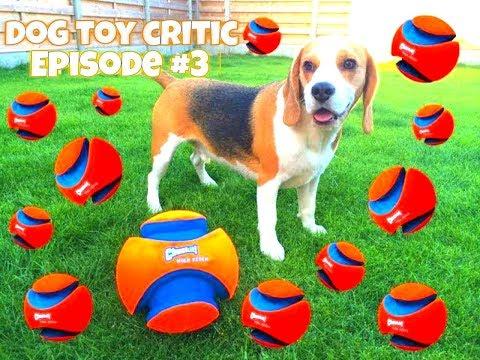 Dog Toy Critic Louie The Beagle  Episode #3 : CHUCKIT KICK FETCH