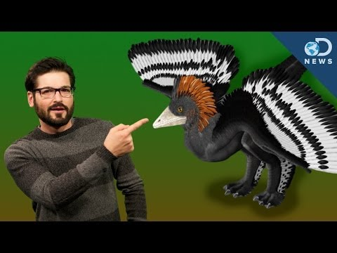 How Did Colors Evolve in Dinosaurs?