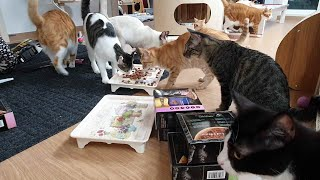 부타네 고양이들 선물이 왔어요