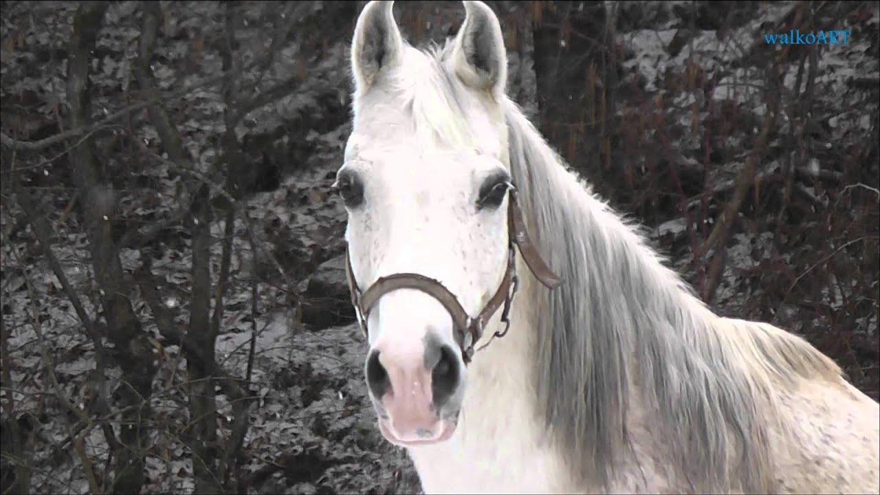 Girl In Gown Wallpaper No Unicorn But A White Horse In The Snow ♕ Kein Einhorn