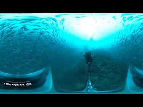 Insta 360 One X Dive case Philippines Underwater Jack fish Tornado Summer cruise