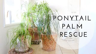 Plant Rescue | Save Your Ponytail Palm From Frost Damage