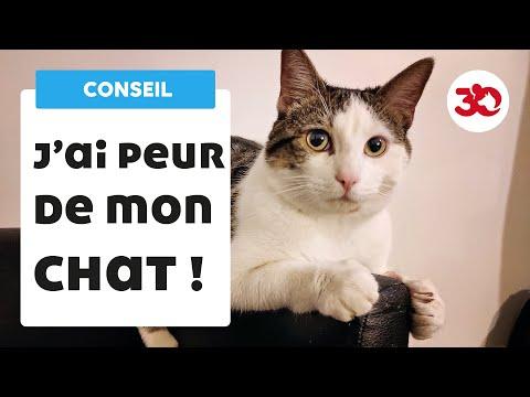J'ai Peur De Mon Chat : Les Conseils D'un Vétérinaire