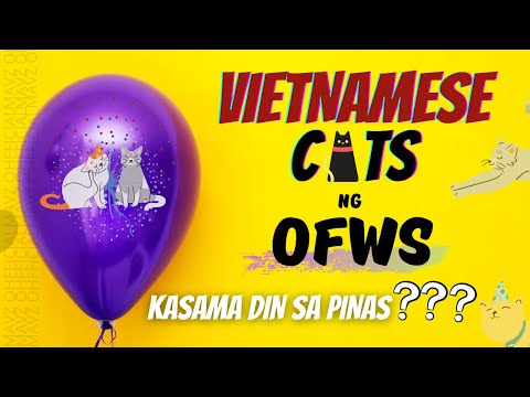 Cats Travel From Vietnam (Meowty & Salty Are Going To The PH)
