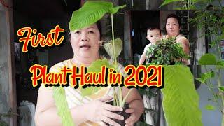 First Plant Haul In 2021 By Lola Malyn