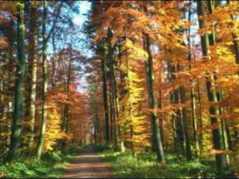 Lởm 55 - Bước trên vùng yêu thương về với mùa thu kỷ niệm