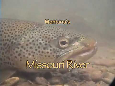 Montana 39 s missouri river youtube for Missouri out of state fishing license