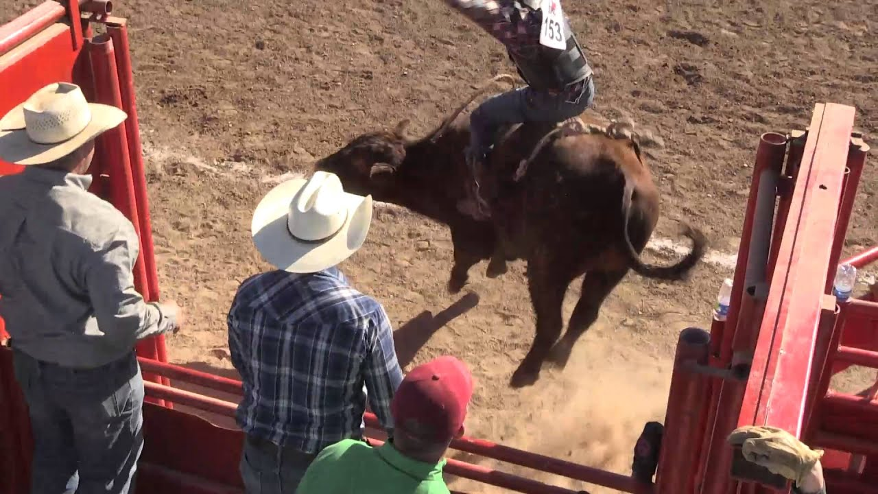4083aed2 2016, Bull Riding, Arizona Gay Rodeo - YouTube