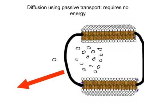Diffusion And Osmosis Youtube