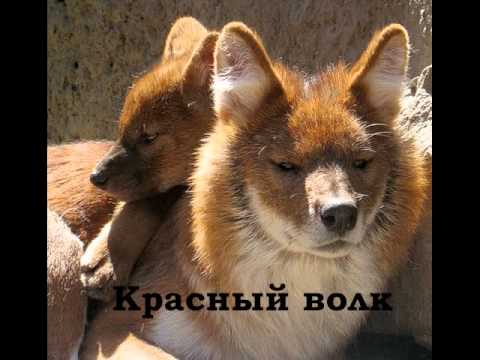 Красная книга Казахстана.wmv
