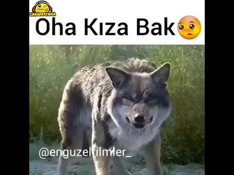 WHATSAPP STATUS VIDEO #4
