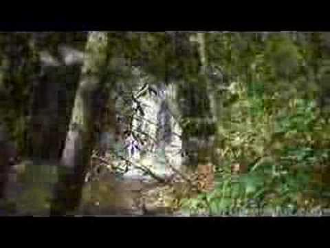 Pisgah -  Avery Creek Trail