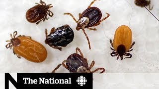 why-are-ticks-spreading-to-cities-across-canada
