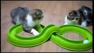 Милые кошки в гостях у кошек